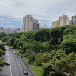 Medición de la vitalidad de los árboles urbanos.