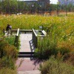 ¿Qué son las soluciones basadas en la naturaleza y por qué son importantes?