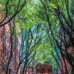 Los árboles de la calle cerca de casa pueden reducir el riesgo de depresión