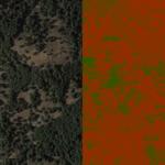 Una técnica 3D que distingue el estado de salud de árboles y de los arbustos con imágenes de satélite